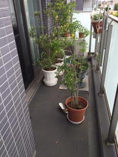 ベランダ整理、プランター、植木鉢、園芸土、植木、生木、植樹回収処分 大田区