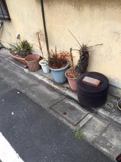 生木、土入り植木鉢、プランター回収処分